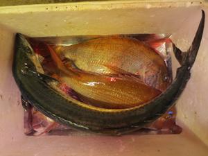 001 29 11月24日午後の釣果