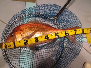 002 26 11月24日午後の釣果