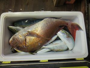 003 11 10月31日午後の釣果