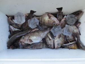 0032 12月27日午前の釣果
