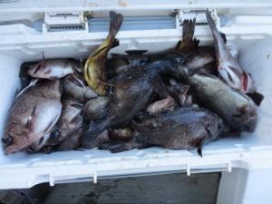 0041 12月22日午前の釣果