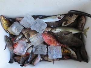 0042 12月27日午前の釣果