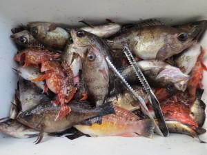 0043 12月28日午前の釣果