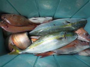 005 1 10月2日午後の釣果