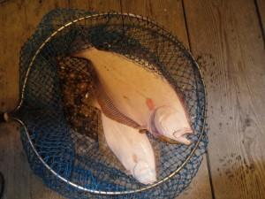 0071 12月24日午後の釣果