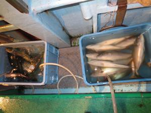 11 2 2 11月2日午後の釣果