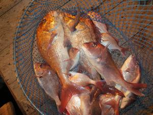 12 23 3 10月23日午後の釣果
