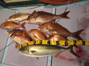 4 27 1 4月27日午後の釣果