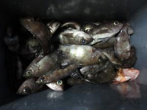00111 2月21日午後の釣果
