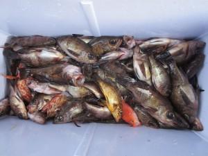 0019 2月14日午前の釣果