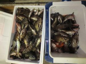 0044 2月11日午後の釣果