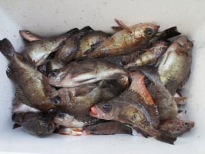 0046 2月12日午前の釣果