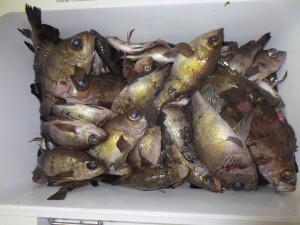 0047 2月21日午後の釣果