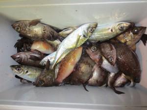 0054 2月11日午後の釣果