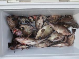 0055 2月13日午前の釣果