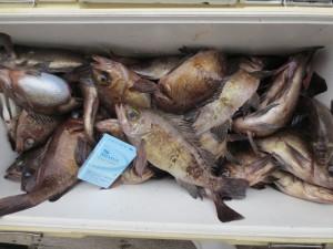 0056 2月15日午前の釣果
