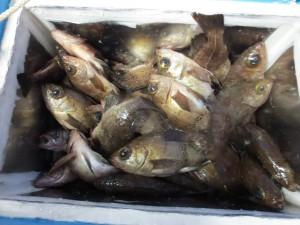 0057 2月21日午後の釣果