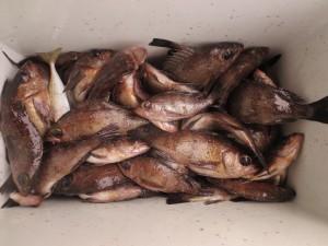 0064 2月24日午前の釣果