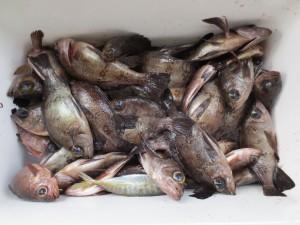 0073 2月24日午前の釣果