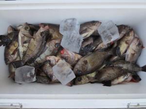 0081 2月13日午前の釣果