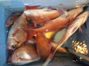 0026 12月12日午後の釣果