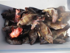 0011 2月4日午前の釣果