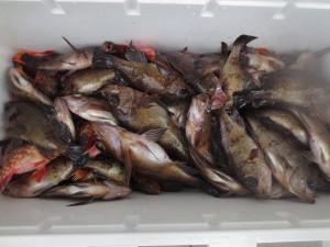 0015 2月14日午前の釣果