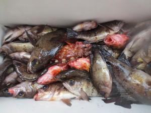 0017 2月17日午前の釣果