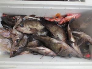 0025 2月14日午前の釣果