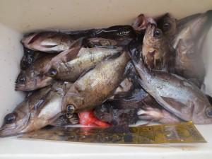 0027 2月17日午前の釣果