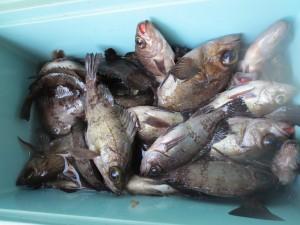 0035 2月16日午前の釣果