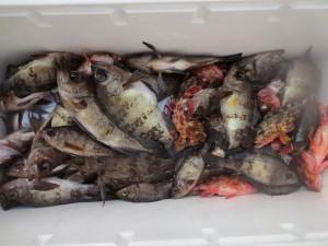 0036 2月17日午前の釣果