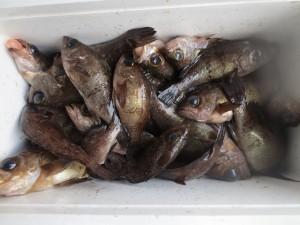 0037 2月20日午前の釣果