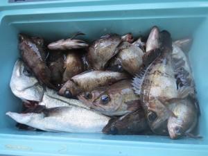 0043 2月16日午前の釣果