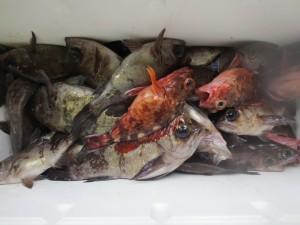005 2月5日午前の釣果