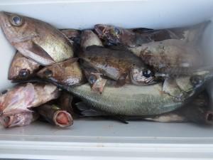 0012 3月12日午前の釣果