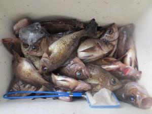 0033 3月23日午前の釣果
