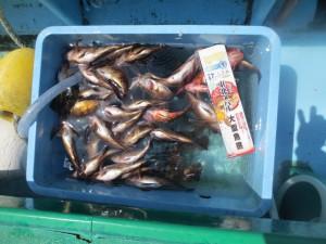 0012 4月19日午前の釣果