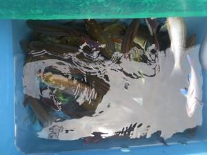 00212 7月28日午前の釣果