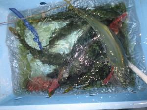 0042 9月20日午後の釣果