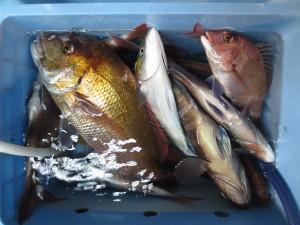 0025 10月12日午後の釣果