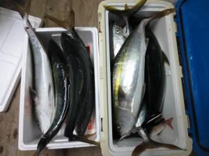 00110 11月12日午後の釣果