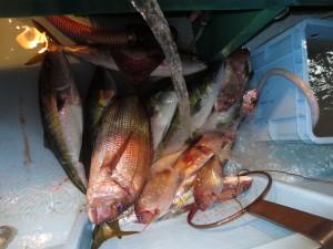 0016 11月7日午後の釣果