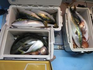 00212 11月14日午後の釣果