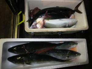 0027 11月8日午後の釣果
