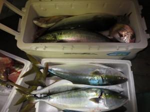 0034 11月5日午後の釣果