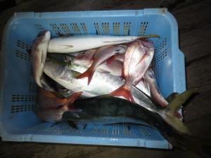 0038 11月10日午後の釣果