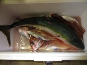 0047 11月13日午後の釣果