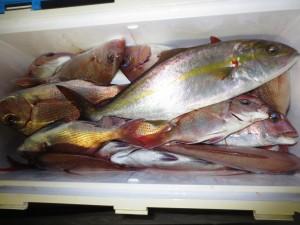 0051 11月3日午後の釣果