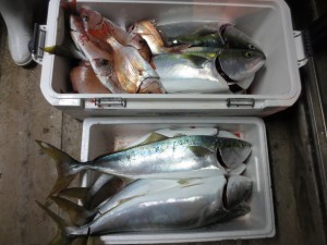 0052 11月5日午後の釣果